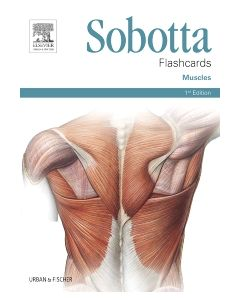 Sobotta Flashcards Muscles